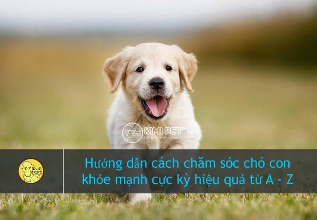 Hướng dẫn cách nuôi chó con tốt nhất